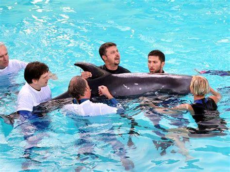 bagno con delfini via libera al bagno con i delfini gli animalisti insorgono