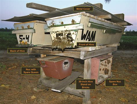 top bar hive management what s hot bee culture