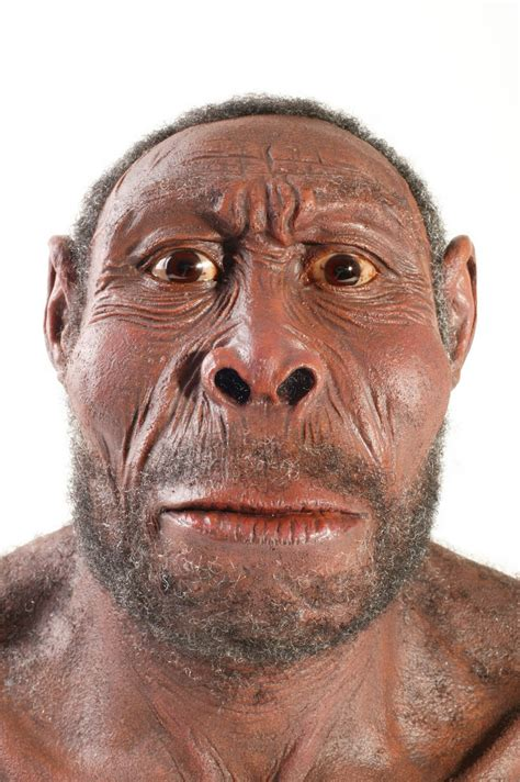 homo erectus pin homo erectus on
