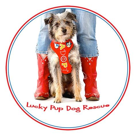 lucky puppy rescue lucky pup rescue nonprofit in san diego ca volunteer read reviews donate