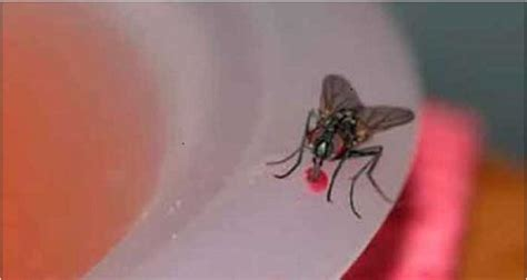 fly infestation in backyard how to get rid of fly infestation in the kitchen just put