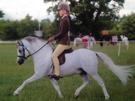 section a welsh 25f m m ridden welsh section a pony who s qualified