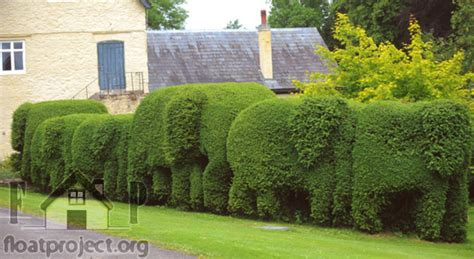 hedge design 28 images evergreen hedge cutter 23 fresh design ideas for gardeners interior