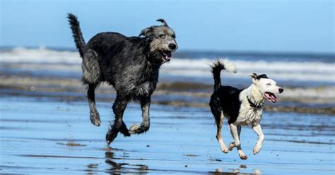 beaches where dogs are allowed the lincolnshire beaches where dogs are allowed all year lincolnshire live