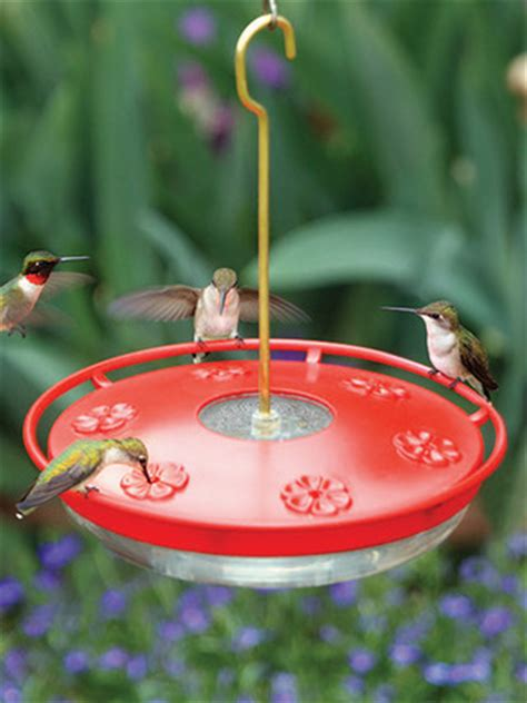 wbu large high perch hummingbird feeder 16 oz
