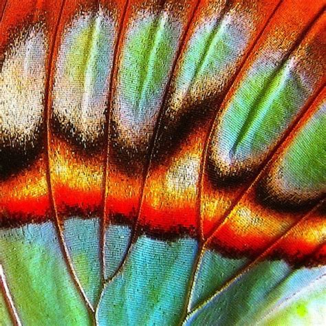 patterns in nature butterflies 451 best images about watercolours on pinterest