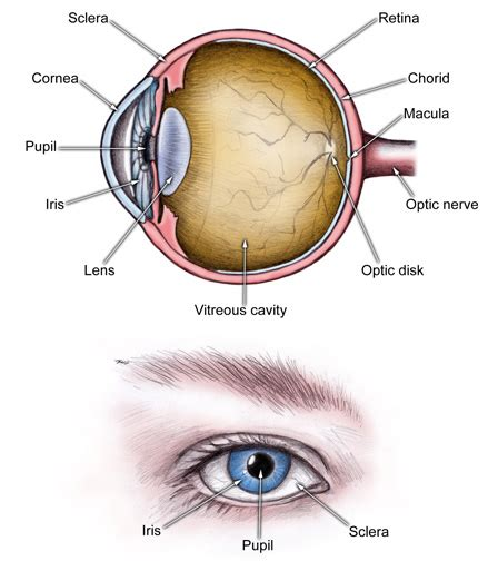 shark eye diagram acute angle closure glaucoma causes symptoms treatment