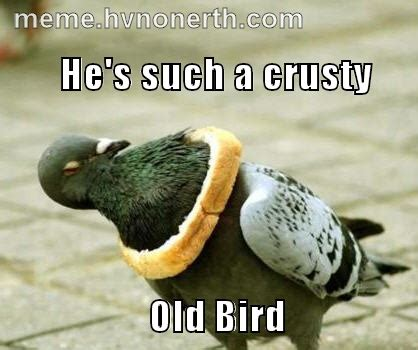 Crazy Bird Meme - crusty old bird 171 meme maker meme s pinterest birds