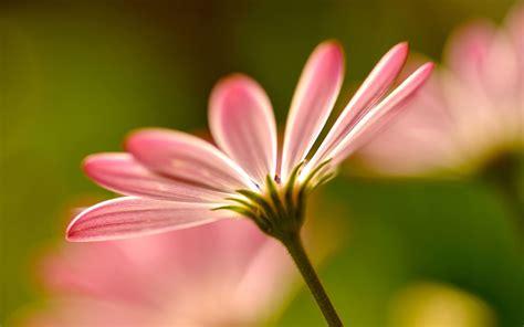 flower photography charming feminine pink flowers hd wallpaper 3 flower