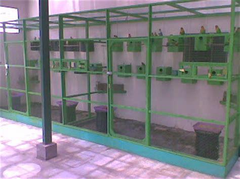 Kandang Kotak Lb 1 membuat tempat bird aiko birds