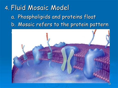 mosaic pattern protein the living cell