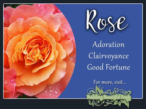 the meaning of the color of roses meaning symbolism june birth flower flower meanings