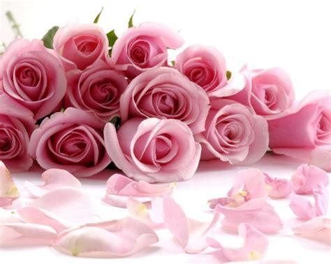 wallpaper pink mutiara gambar pink rose clipart bunga mawar pencil color pin 13