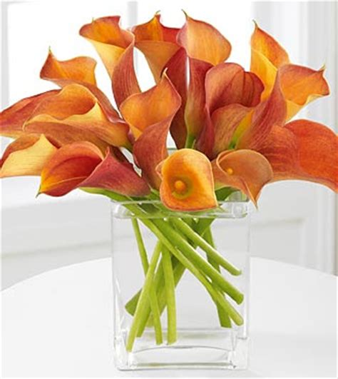calla lilies colors forevemore events c is for calla flowers 101