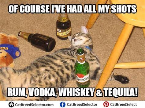 Drunk Cat Meme - happy birthday melmerf mississippi gun owners