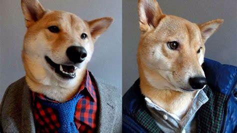 dogs wearing clothes wearing clothes takes by