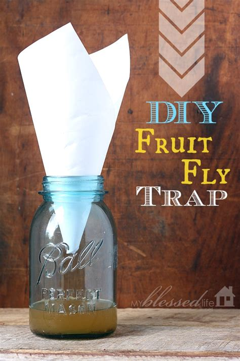 How To Make Paper Look With Vinegar - get rid of fruit flies diy fruit fly trap hometalk