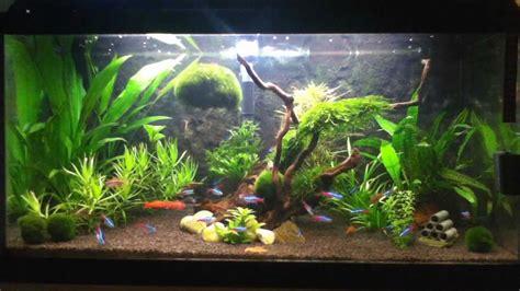 aquarium 80 cm avi