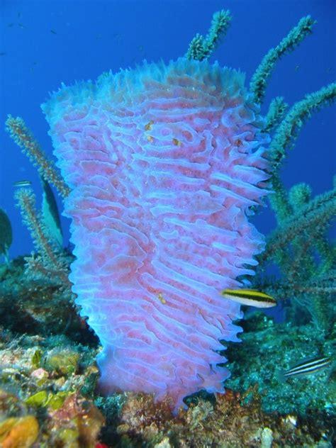 gallery for gt azure vase sponge facts