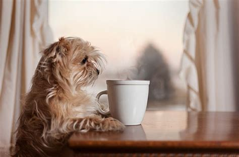 dogs and coffee coffee and i want coffee