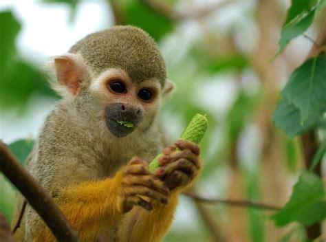 monkey and rainforest monkeys