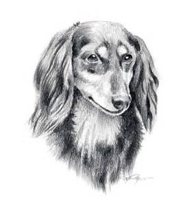 teckel poil long chien crayon dessin art print sign 233 e par