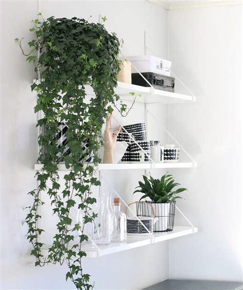 gorgeous ways  decorate  plants melyssa griffin