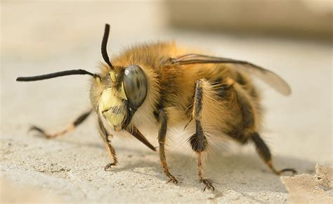 how to get rid of a beehive in your backyard how to get rid of carpenter bees easiest way