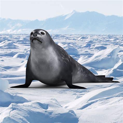 Seals Model A