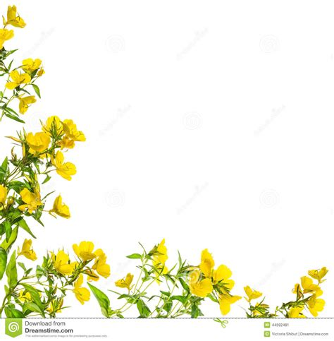 border design flower yellow yellow flower clipart border pencil and in color yellow