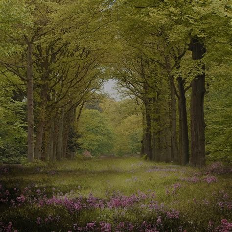 enchanted forest background enchanted forest background