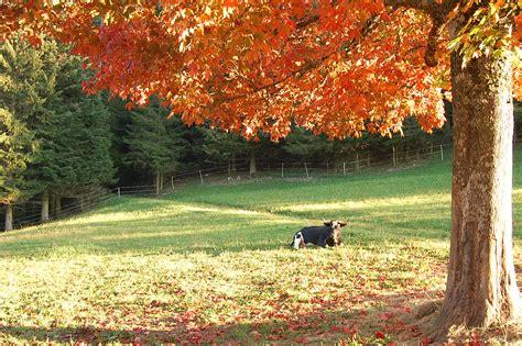 imagenes de invierno con animales primavera verano oto 241 o invierno y t 250 191 cu 225 l prefieres
