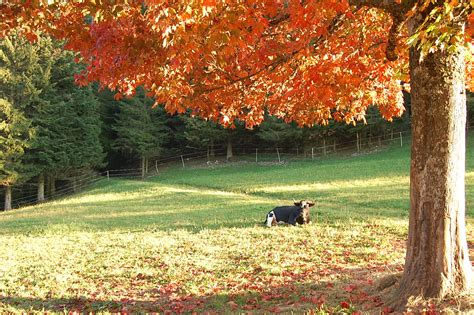 imagenes de invierno otoño verano primavera primavera verano oto 241 o invierno y t 250 191 cu 225 l prefieres