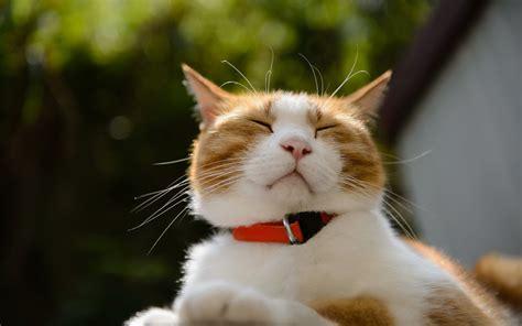 imagenes para fondo de pantalla gatos im 225 genes de gatos en hd para fondo de pantalla para descargar
