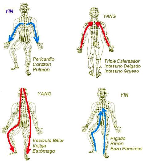 cadenas vélo test acupuntura gaditana teor 237 a de los canales y los puntos