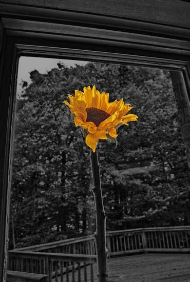 flowers   window fine art photographs david stein photography