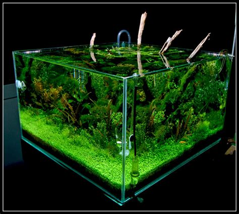 cube aquarium aquascape share