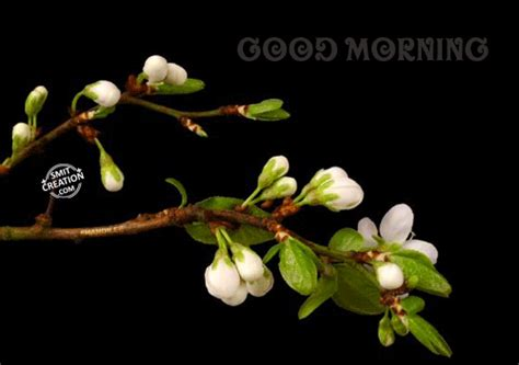 wallpaper gif good morning good morning gif image pictures and graphics