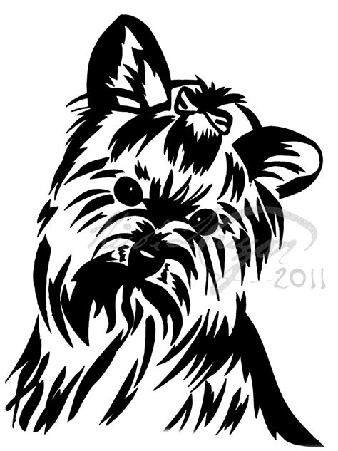 ebay yorkie 1000 images about black white yorkie world on