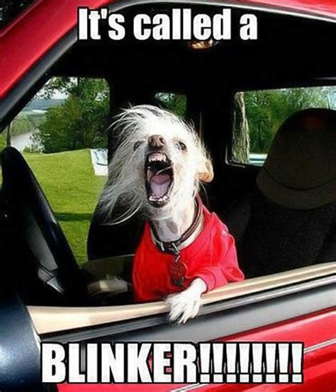 Meme Driver - road rage memes are the driving force behind humor barnorama