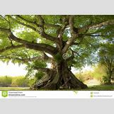 Family Tree Roots Background | 1300 x 951 jpeg 311kB