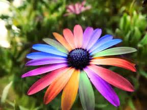 flowers scraps pictures images graphics for myspace facebook