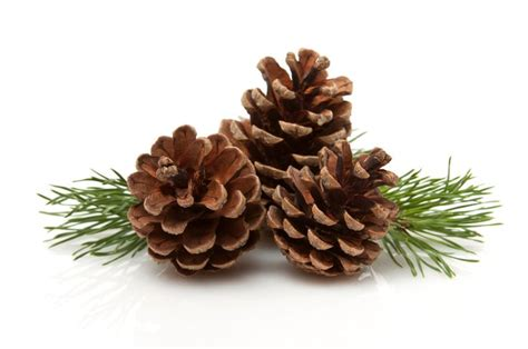 Pine Cone Cottage by 92 Best Pinecone Cottage Images On