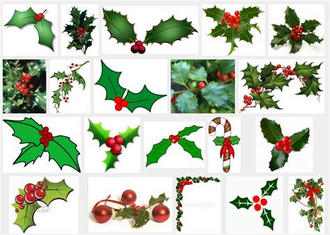 google images holly botanical accuracy holly a winter holiday plant without