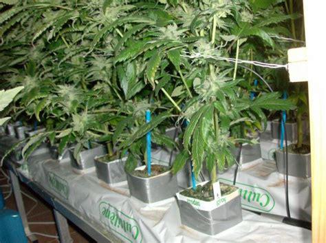 interior de marihuana casero c 243 mo montar un sistema de cultivo de marihuana hidrop 243 nico