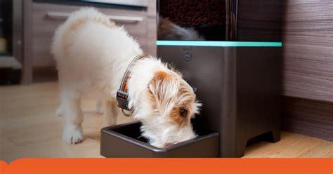 alimentazione animali domestici smartbowl la ciotola intelligente per animali domestici