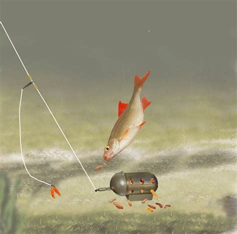 7 best images about fish carp on pinterest | carp fishing