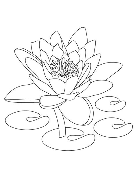 coloring pages of lotus flowers free printable lotus coloring pages for