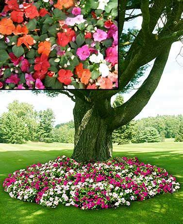 Flower Seed Mats by The Novelty Grow Mat Is A And Easy Way To Grow Beautiful Flowers Just Position The Mat