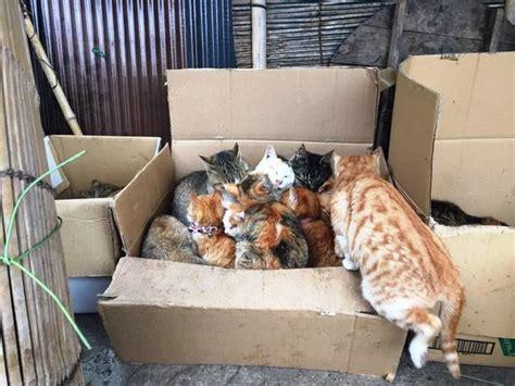 Paket Tempat Kotoran Kucing pulau kucing di jepang ini meminta bantuan makanan